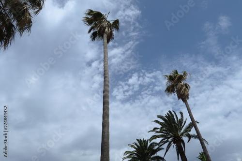 Photo Palmiers agités par le vent, ciel nuageux.