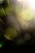 canvas print picture Bokeh light with spider web