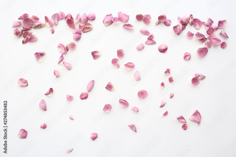 Fototapeta pink and red petals background / abstract aroma background, spa pink petals
