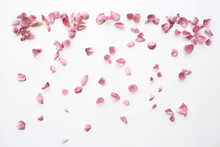 Pink And Red Petals Background / Abstract Aroma Background, Spa Pink Petals