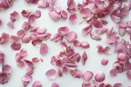 Deurstickers Kersenbloesem background fold flower macro / red flower, abstract aroma background gentle summer rose