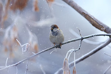 Wintering Birds / Bird Flock, ...