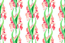 Pattern Red Flowers Irises On A White Background.