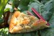 Rhabarberkuchen auf einem Rhabarberblatt