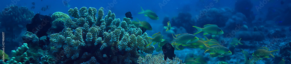 Fototapeta coral reef underwater / lagoon with corals, underwater landscape, snorkeling trip