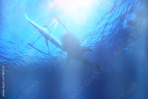 sun rays scuba reef / blue sea, abstract background, sunny day, rays in water Wallpaper Mural