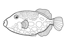 Triggerfish Fish Clown, Line Silhouette Cartoon Hand Drawn Sea Animal, Contour Maritime Character, Coloring, Sketch. Outline Isolated Black And White Drawing Fish With Spots. Vector Illustration