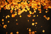 Fall Wet Leaves Background / A...