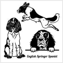 English Springer Spaniel - Vec...