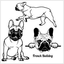 French Bulldog - Vector Illust...