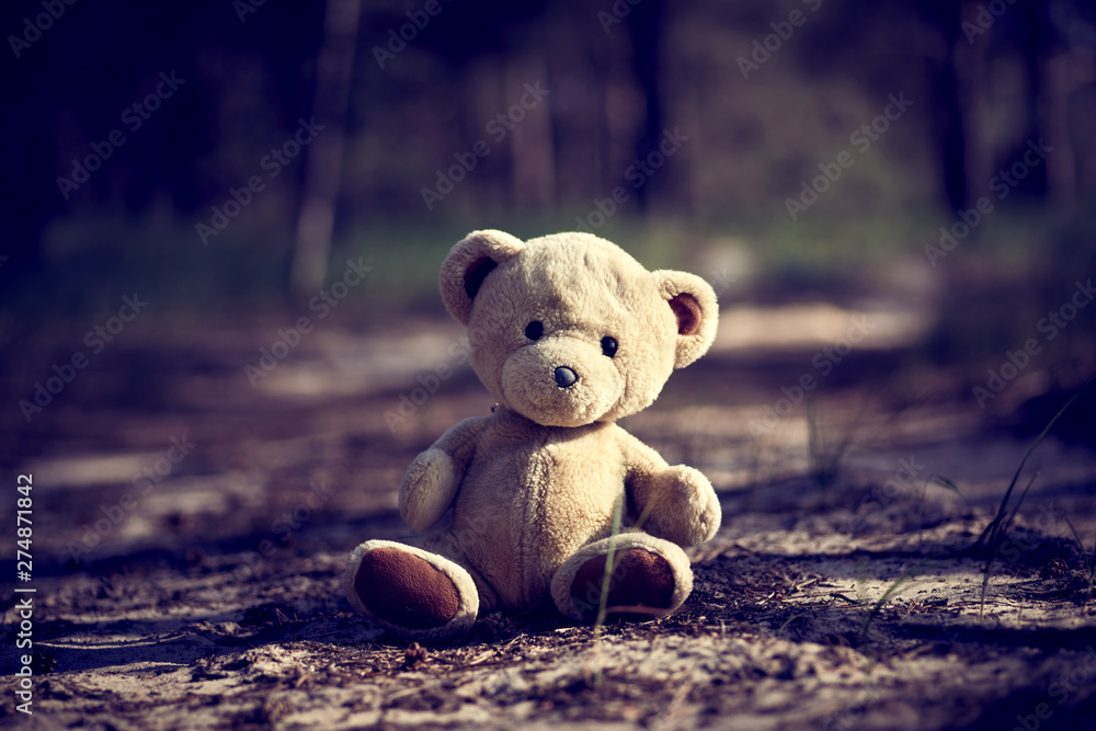 Fototapety, obrazy: teddy bear sitting in the middle of the forest