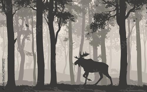 fototapeta na drzwi i meble moose