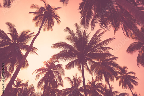 Foto auf AluDibond Hochrote Tropical palm tree on sunset sky cloud abstract background.