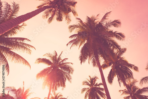 Foto auf Gartenposter Hochrote Tropical palm tree on sunset sky cloud abstract background.