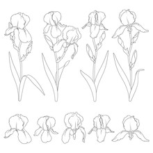 Set Of Black And White Illustrations With Iris Flowers. Isolated Vector Objects On White Background.