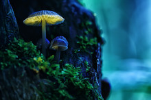 Small Mushrooms Macro / Nature Forest, Strong Increase In Poisonous Mushrooms Mold