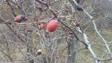 Autumn Photo Of The Branches O...