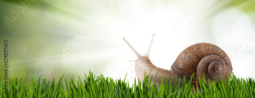 image of a snail on the grass in the park closeup Canvas Print