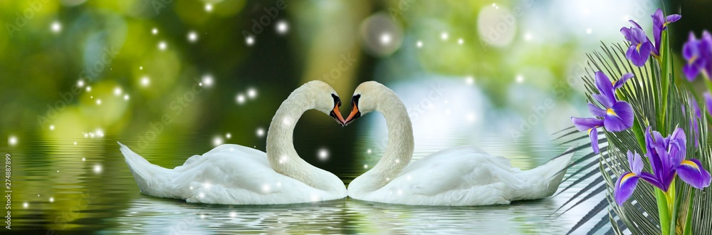 Fototapety, obrazy: image of swans on the water and flowers closeup