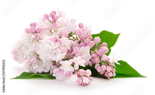 Montage in der Fensternische Blumen Pink lilac flower.