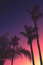 Tropical Summer Night Background With Palm Trees At Sunset