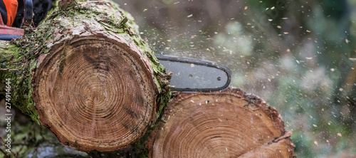 Photographie Logs are cut with a chainsaw.