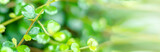 Natural banner, green leaves in the garden