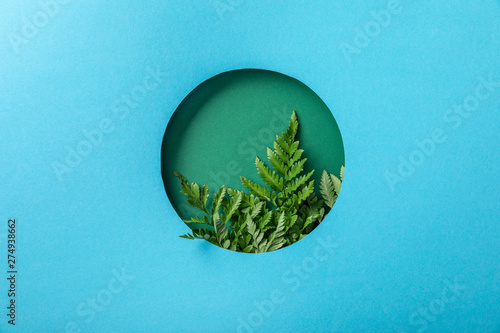 Fotomural  fern leaves in green round hole on blue paper