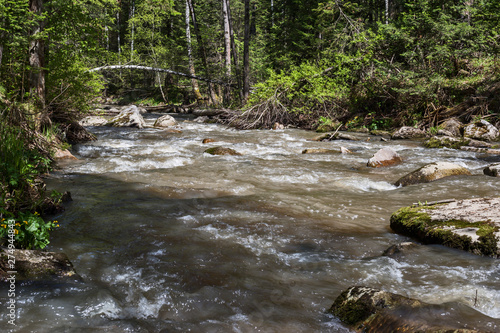 Foto auf Gartenposter Forest river mountain river in the forest