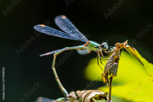 Canvas Prints Butterfly damselfly,