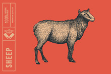 Retro Graphic Hand-drawn Sheep On A Red Background. Engraving With Farm Animal For Menu Restaurants, For Packaging In Markets And Shops. Vector Vintage Illustrations.