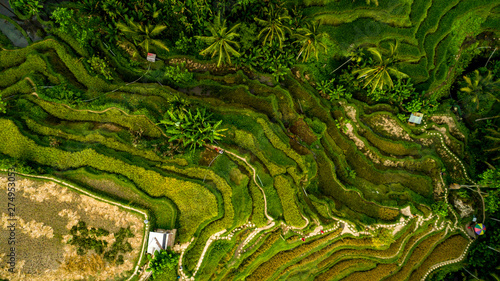 Garden Poster Rice fields Amazing Landscape Above Rice Terraces