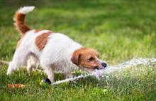 Happy Wet Puppy Pet Dog Playin...