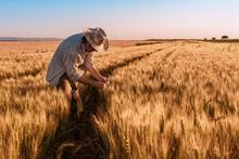 Agronomist Farmer Is Inspectin...