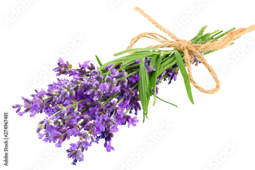 Garden Poster Lavender lavender flowers isolated on white background. bunch of lavender flowers.