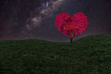 Red Heart Shaped Tree On A Field At Night