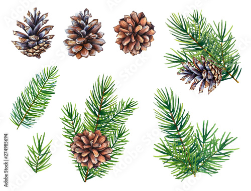 Stampa su Tela Collection of watercolor illustrations of the pine cones and fir tree branches