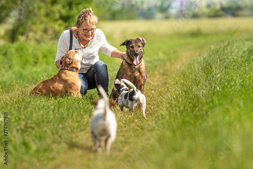 Photo  Dog sitter is walking  with many dogs on a leash