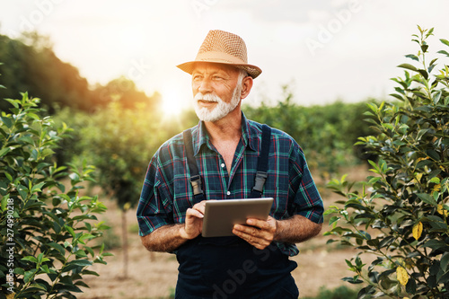 Fotografía  Sixty years old beard agronomist inspecting trees in orchard and using tablet computer
