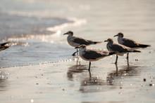 Four Seagulls On The Beach