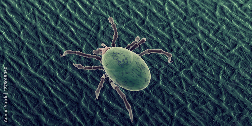 Fototapety, obrazy: 3d rendered illustration of a tick on human skin, sem style