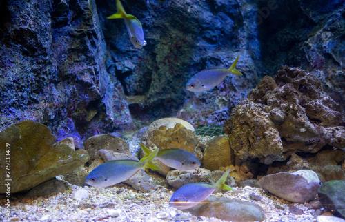 fish swimming in aquarium #275033439