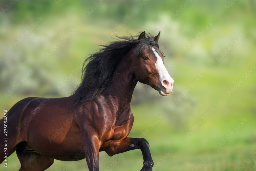 Fototapety, obrazy: Horse portrait on green background