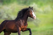 Horse portrait on green background