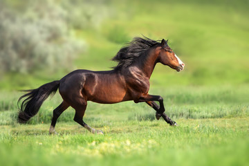 Horse with long mane run gallop