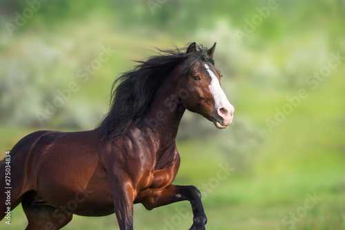 Poster Paarden Horse portrait on green background