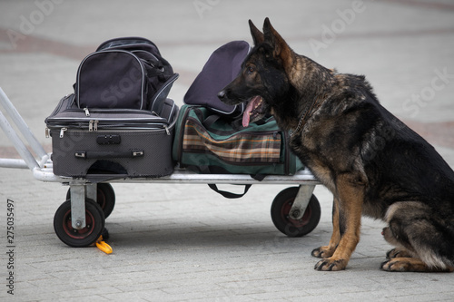 Photo  Police officer examining a bag with trained dog