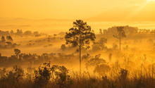 The Sun Rises In Golden Morning Light Over The Trees Of Thung Salaeng Luang National Park,Thailand