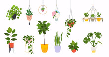 Set Of Macrame Hangers For Plants Growing In Pots. Flowerpot Isolated Objects, Houseplant Flower Pot Collection.