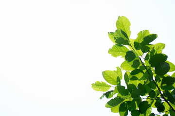 Green tropical leaves over bright background